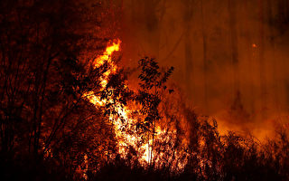 维州丛林火情更新:未来一周将出现雷雨