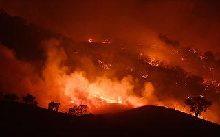 澳洲野火燒不盡 動物園園長把動物帶回家養