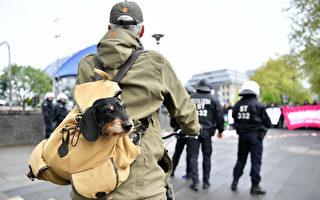 带着宠物去旅行 狗背包选购指南
