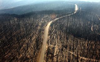 山火衝擊經濟 50億元聯邦預算盈餘或蒸發