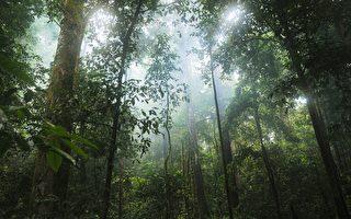 維州男子雨林失蹤三週獲救 身體健康