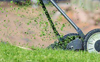 打理草坪最常见的错误