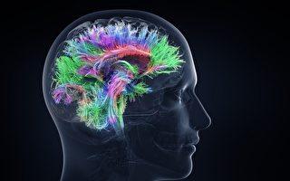难得的人脑实验发现其独有特性