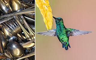 湯匙和刀叉不只是餐具 藝術家打造成生動的小鳥