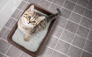 【貓的二三事】飼主必學! 教你輕鬆清除貓尿