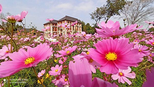 赏波斯花海秘径 台南山上花园水道博物馆