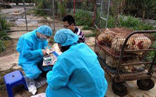 中共肺炎防疫 台专家:猫犬不会感染新冠肺炎