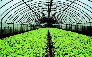 延後開學  桃園推出有機蔬菜箱認購協助小農