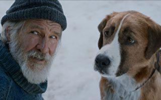 《极地守护犬》影评:拥有好主人 未必是狗的唯一归宿