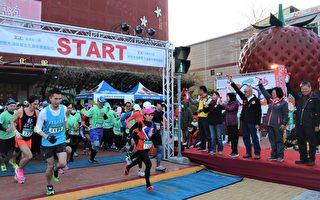 大湖草莓文化嘉年華馬拉松 2千多名跑友低溫中熱情開跑