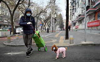 防中共肺炎 中国小猫和小狗戴口罩