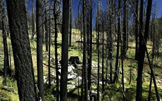維州最高法院要求暫停部分伐木活動