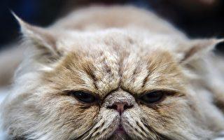 【猫的二三事】搞懂猫的语言与肢体动作