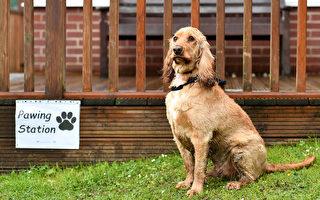 英國小狗有水汪汪的大眼睛 迷倒一片網民