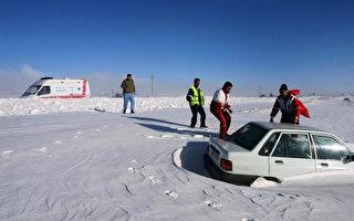 羊群遭大雪掩埋 伊朗農民奮力挖出 救活不少