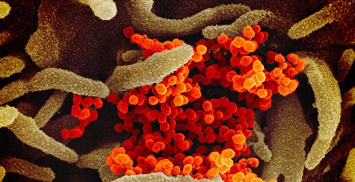 新型冠狀病毒肆虐 喬州衛生部忠告