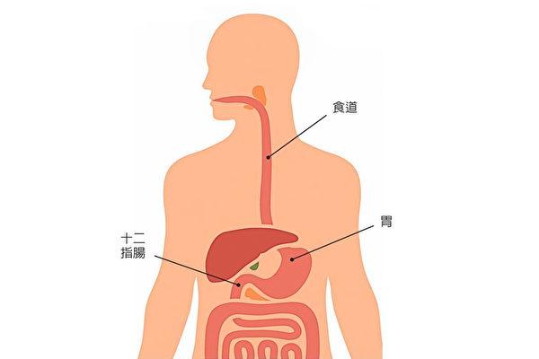 上消化道出血定義為,上消化道,包括食道、胃、十二指腸的出血。(123RF)