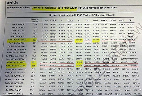 黃色高亮區顯示,新馬蹄蝠病毒和中共病毒整體同源性達到96.2%,E蛋白達到100%一致。(G-NEWS)