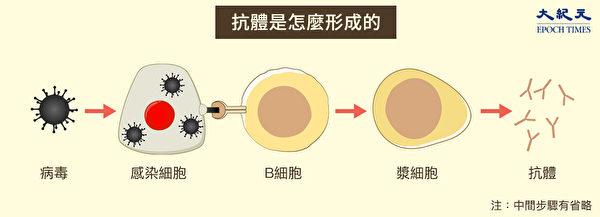 病毒進入人體之後,通常會激發免疫系統產生抗體。(Shutterstock/大紀元製圖)