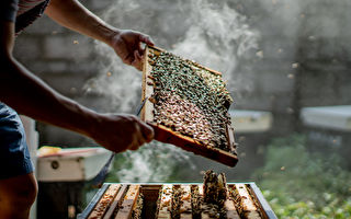 堅持三代的好品質-蜜鄉養蜂園