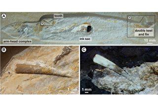 翼龍的牙齒怎麼卡在章魚的頭上變成化石?