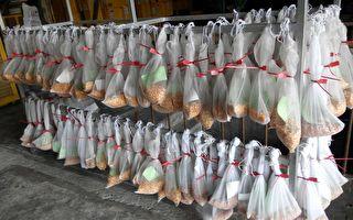 硬質玉米陸續採收  依規定繳交收益有保障