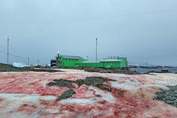 乌克兰的南极基地出现异样的雪 一片血红色