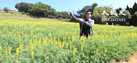 许多游客前来赏花游玩,还开心拍照。