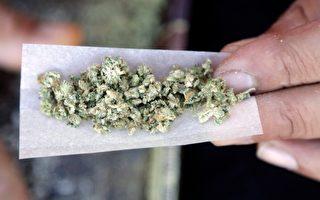 加拿大人用大麻 小心芳邻卡申请被拒