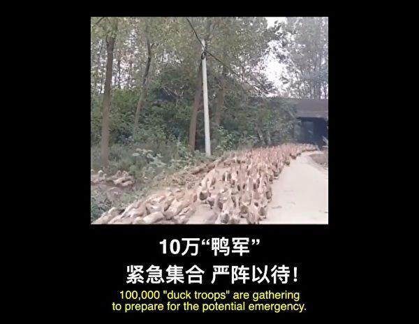 中國國際電視台稱,印巴邊境四千億蝗蟲正向中國逼近,十萬「鴨軍」緊急集合,嚴陣以待。(影片擷圖)
