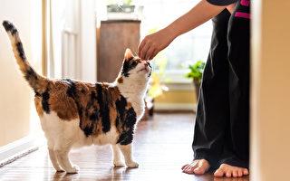 【猫的二三事】猫咪可以训练吗?