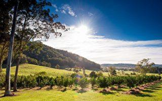 風靡澳洲家庭的澳洲水果沙拉樹