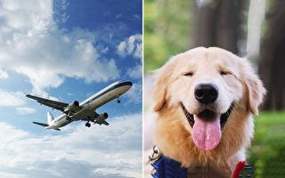 搭機太無聊!小黃金犬搞笑搭訕全機乘客