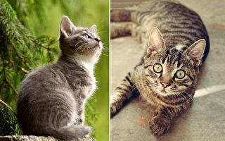 """这只猫咪肚子饿时会说""""饿哦""""表达超精准"""