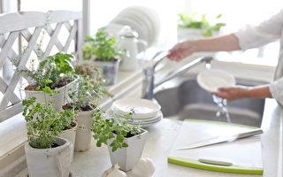 美化厨房窗台 9种生命力旺盛的室内盆栽