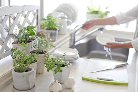 美化厨房窗台 9种实用又好照顾的室内盆栽