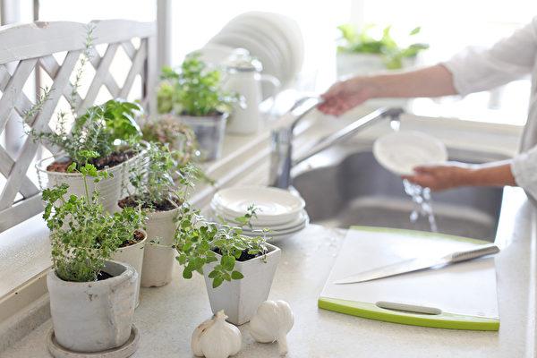 美化廚房窗台 9種生命力旺盛的室內盆栽