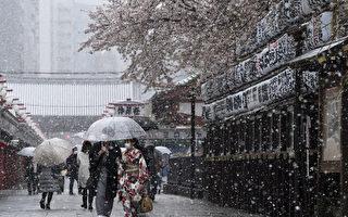 组图:日本东京降雪 满开樱花与积雪同框