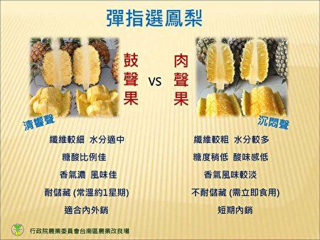 鼓聲果與肉聲果特性比較。