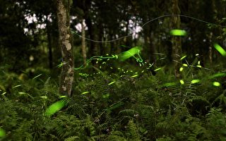 花蓮光復鄉平地森林低碳低密度賞螢聖地