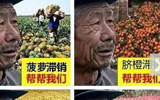 水果尚未上市就滞销 境外诈骗流入社群