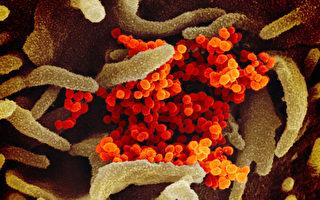 美CDC:發病前 中共肺炎病患可傳播病毒1-3天