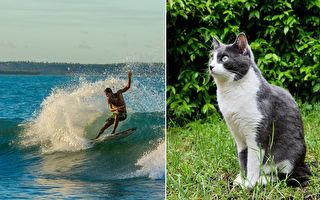 貓咪怕水?夏威夷小貓會游泳、衝浪 網:超帥