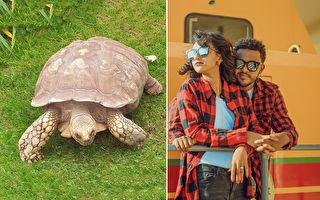 宠物龟和夫妻一家3口穿同款服 网:超呆萌有趣