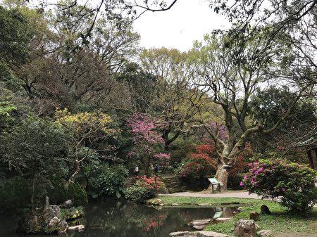 春季上陽明山賞花,正是時候。