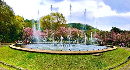 噴水池畔可欣賞到晝夜不一樣的櫻姿花情。