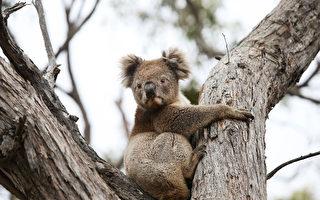 延烧8个月 澳洲新南威尔斯省野火终于扑灭