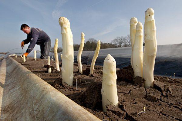 季节性外劳被拒入境 德国蔬果没人收
