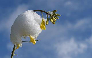 暖冬過後 美國多地提早「入春」