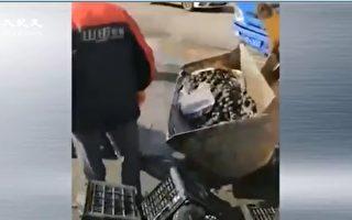 疫情衝擊 水果賣不出 批發市場用鏟車倒掉